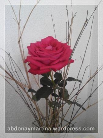 20151006_rosa